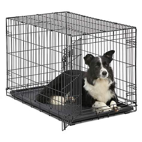 Midwest Icrate Single Door Folding Dog Crates Petco