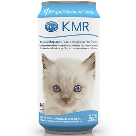 Newborn Kittens For Sale In Ky Newborn Kittens