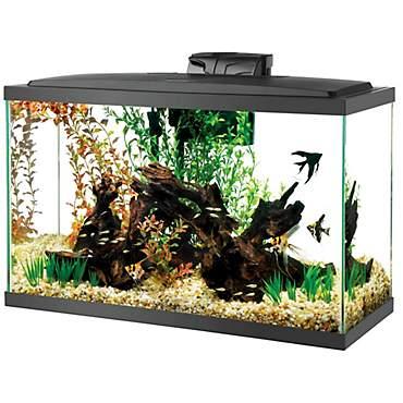 Aqueon Standard Glass Aquarium Tank 29 Gallon Petco