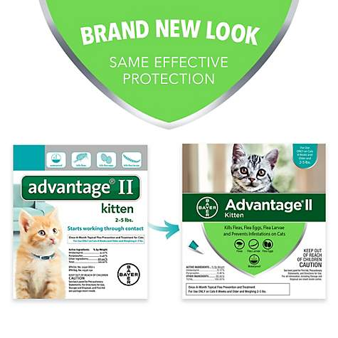 Advantage Ii Once A Month Cat Kitten Topical Flea Treatment 2 To
