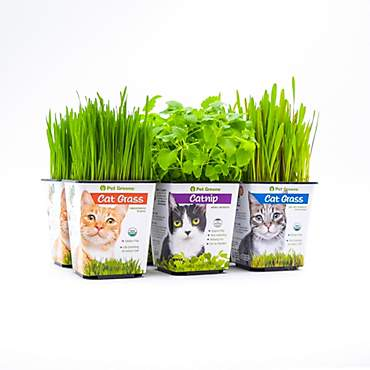 Pet Greens Multi-Pack Live Cat Grass and Catnip
