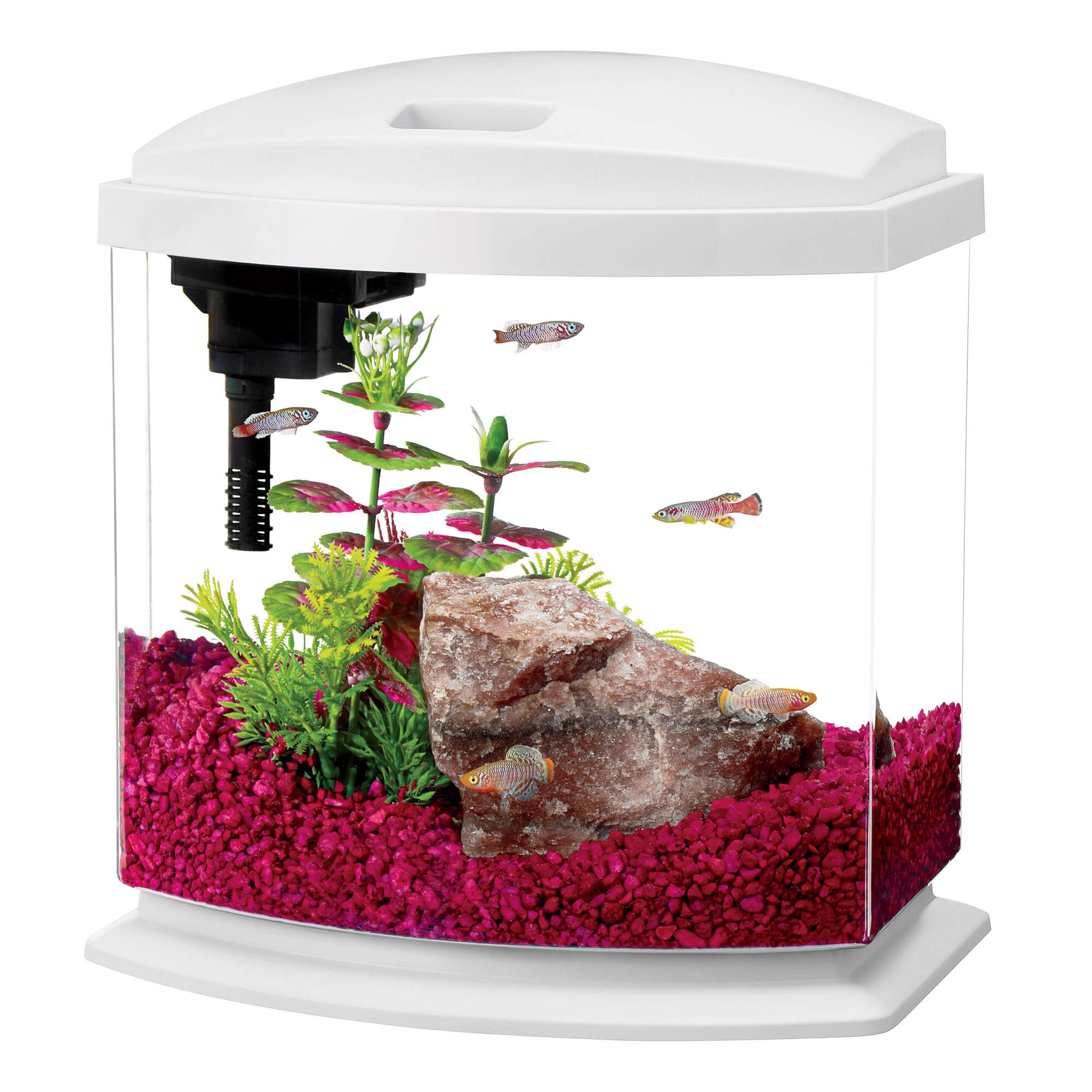 aqueon minibow led desktop fish aquarium kit in white petco. Black Bedroom Furniture Sets. Home Design Ideas