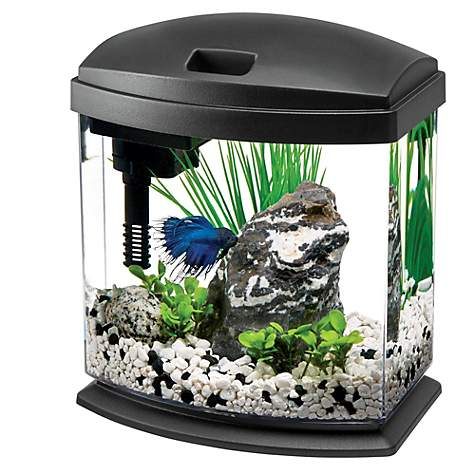 Aqueon 1 Gallon Minibow Led Desktop Fish Aquarium Kit Black Petco