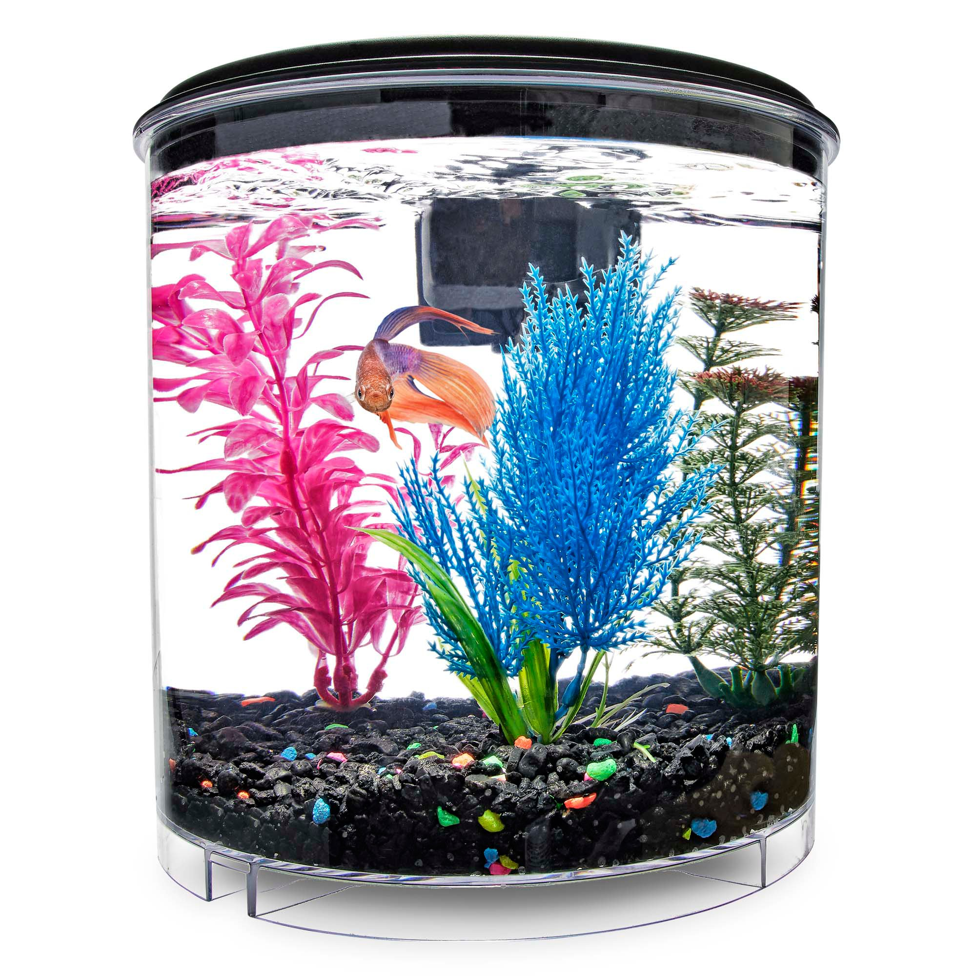 Imagitarium 2 gallon cumberland petco for Betta fish tanks petco
