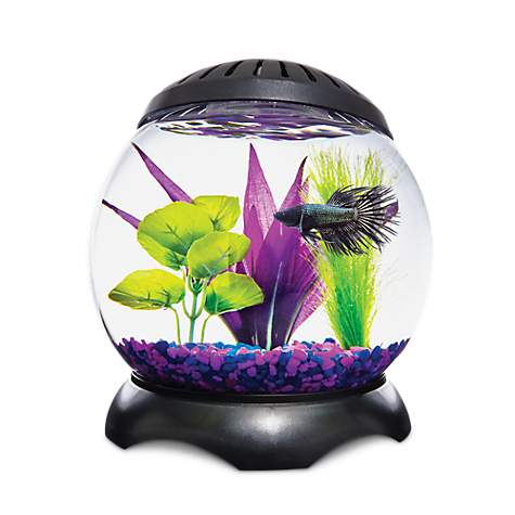 Imagitarium lotus tank petco for Betta fish tanks petco