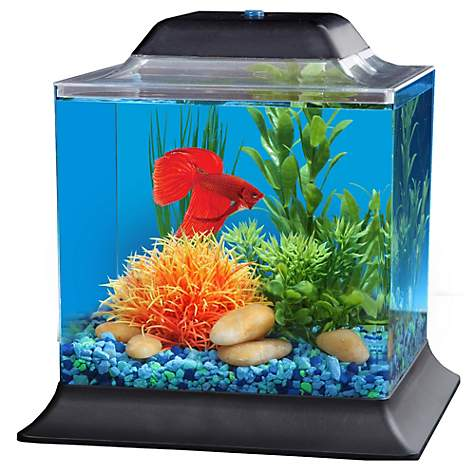 Imagitarium Betta Aquarium Petco