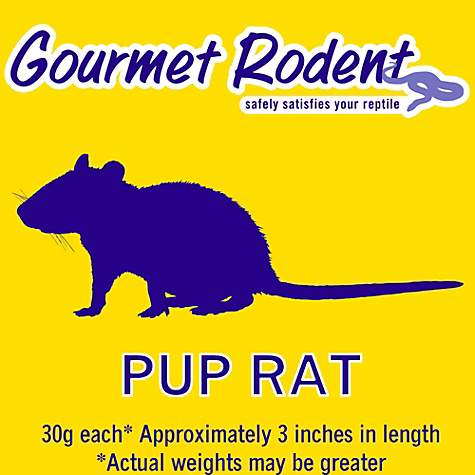 Frozen Pup Rat - 10 Count