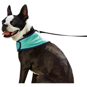 Good2Go Cooling Dog Bandana