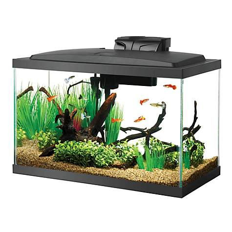 Aqueon 10 gal black aquarium petco for 20 gallon fish tank kit