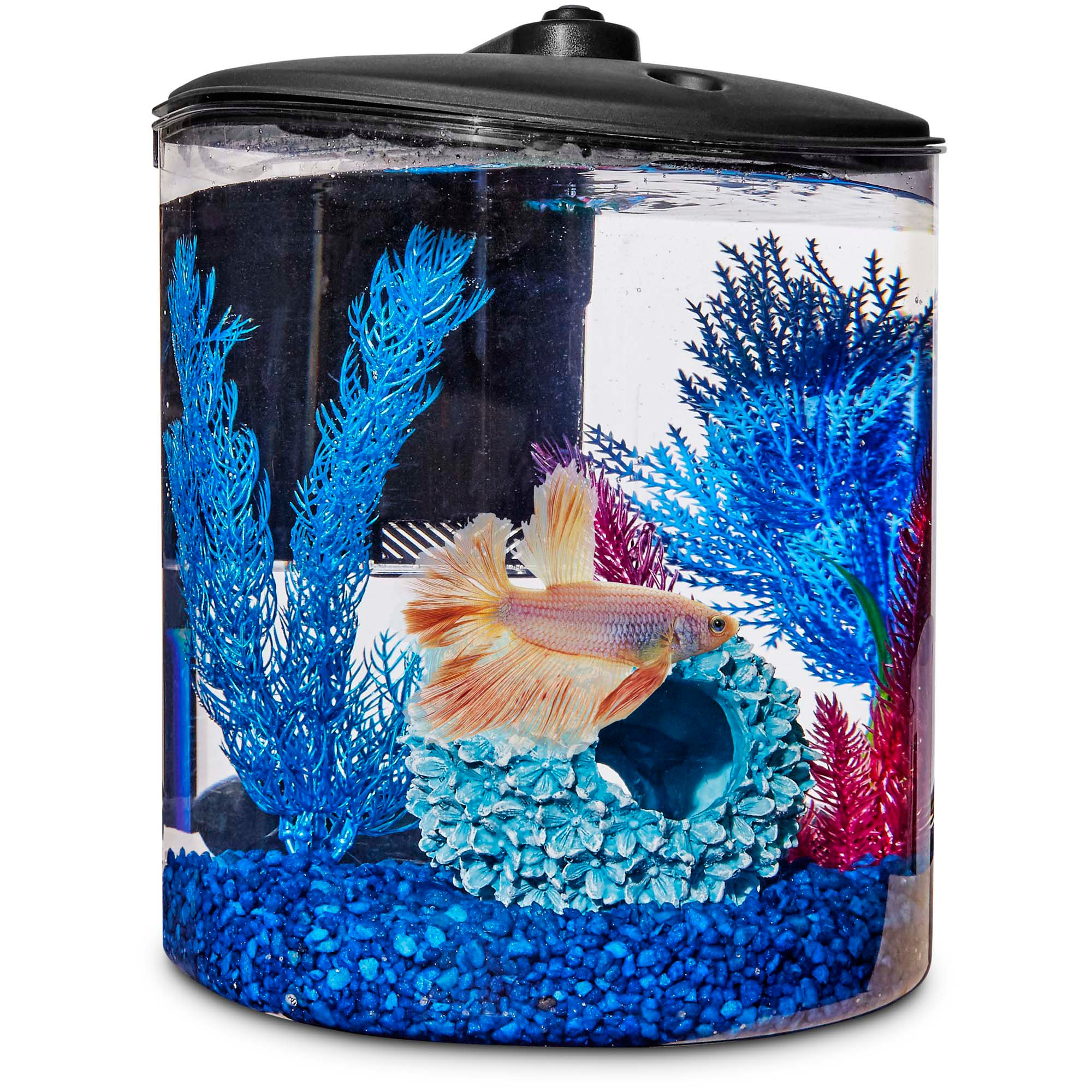 Imagitarium cylindrical betta fish desktop tank kit petco for Betta fish tanks petco