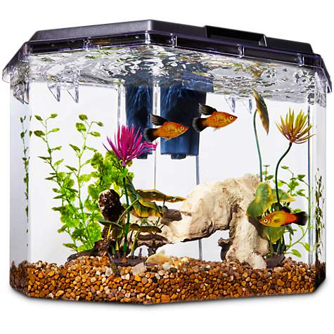 Imagitarium Semi Hexagonal Aquarium Kit 6 7 Gal Petco