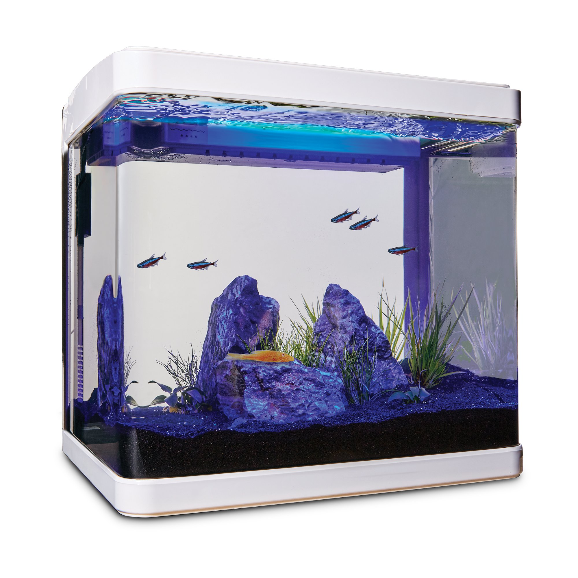 Imagitarium freshwater cube aquarium kit petco for Betta fish tanks petco