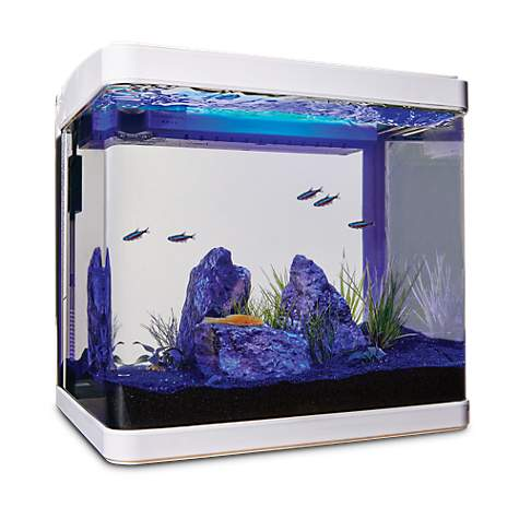 Imagitarium Freshwater Cube Aquarium Kit 5 2 Gal Petco