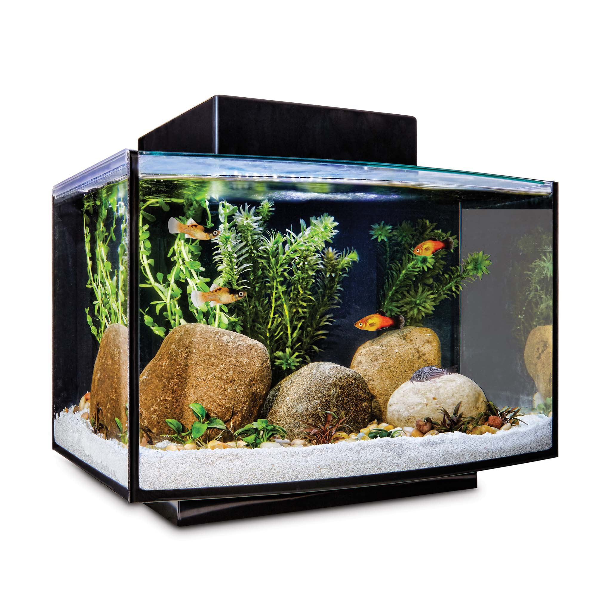 petco turtle tank kit. Black Bedroom Furniture Sets. Home Design Ideas