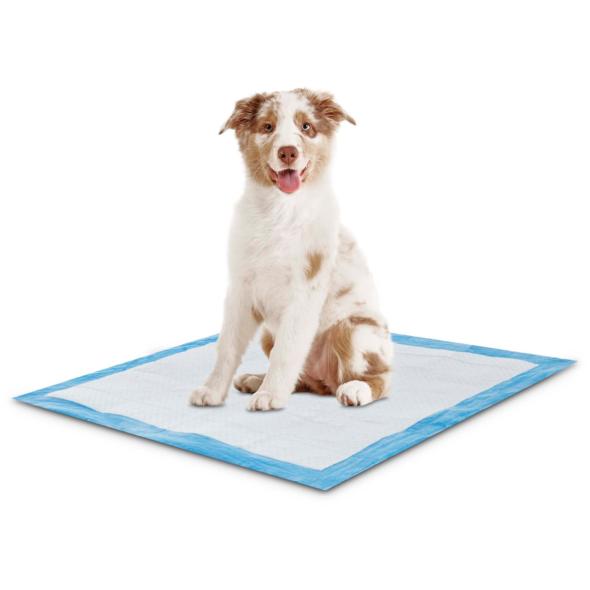 how to potty train your puppy on pads