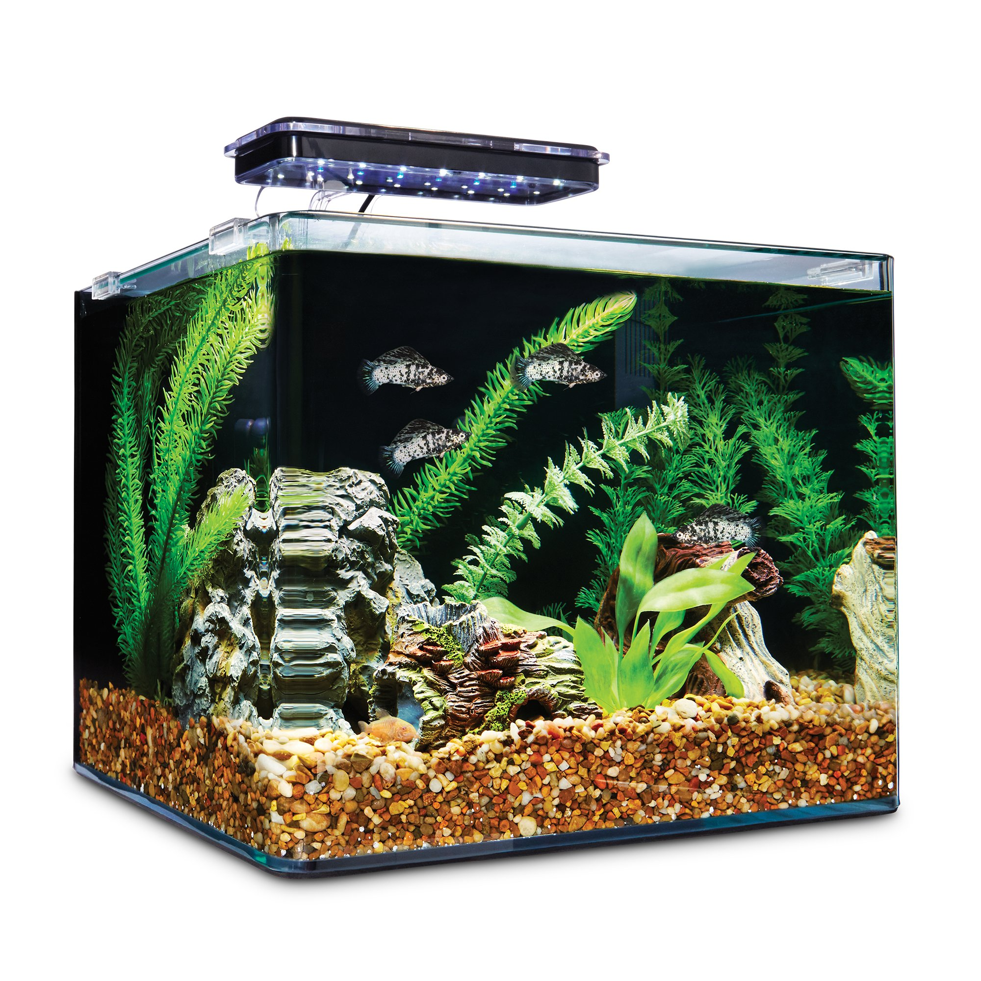 Imagitarium frameless freshwater aquarium kit petco for Betta fish tanks petco