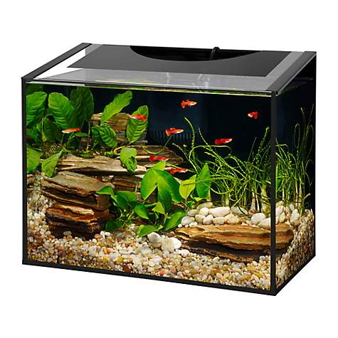 Aqueon ascent frameless led aquarium kit petco for How much is a fish tank