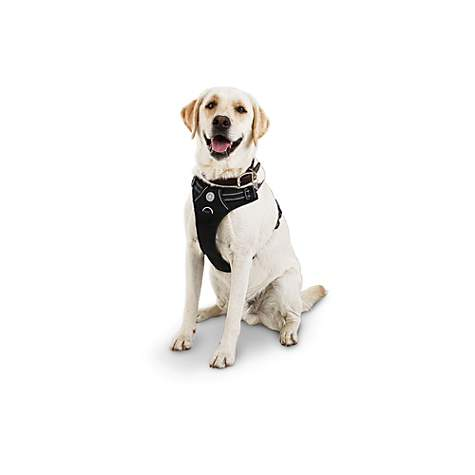 Good2go Black Front Walking Dog Harness Petco