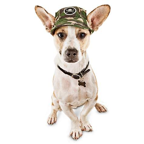 Bond & Co Skull Camo Dog Cap