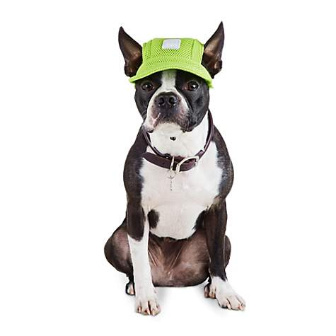 Bond & Co Green Mesh and Reflective Dog Cap