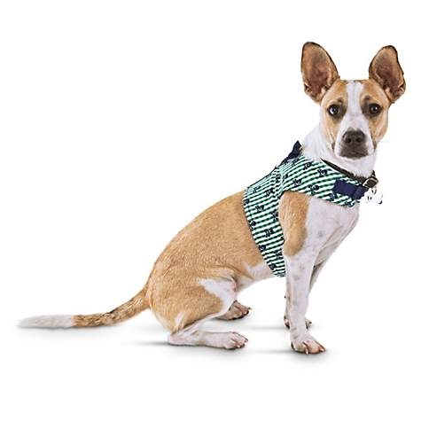 Bond & Co Skull and Green Gingham Dog Harness | Petco