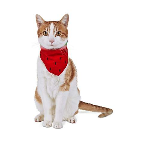 Bond & Co. Red Watermelon Cat Bandana