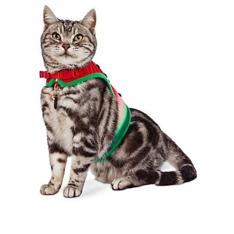Bond & Co. Red Watermelon Cat Harness | Petco