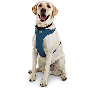 Jubilee Blue Large Dog Harness