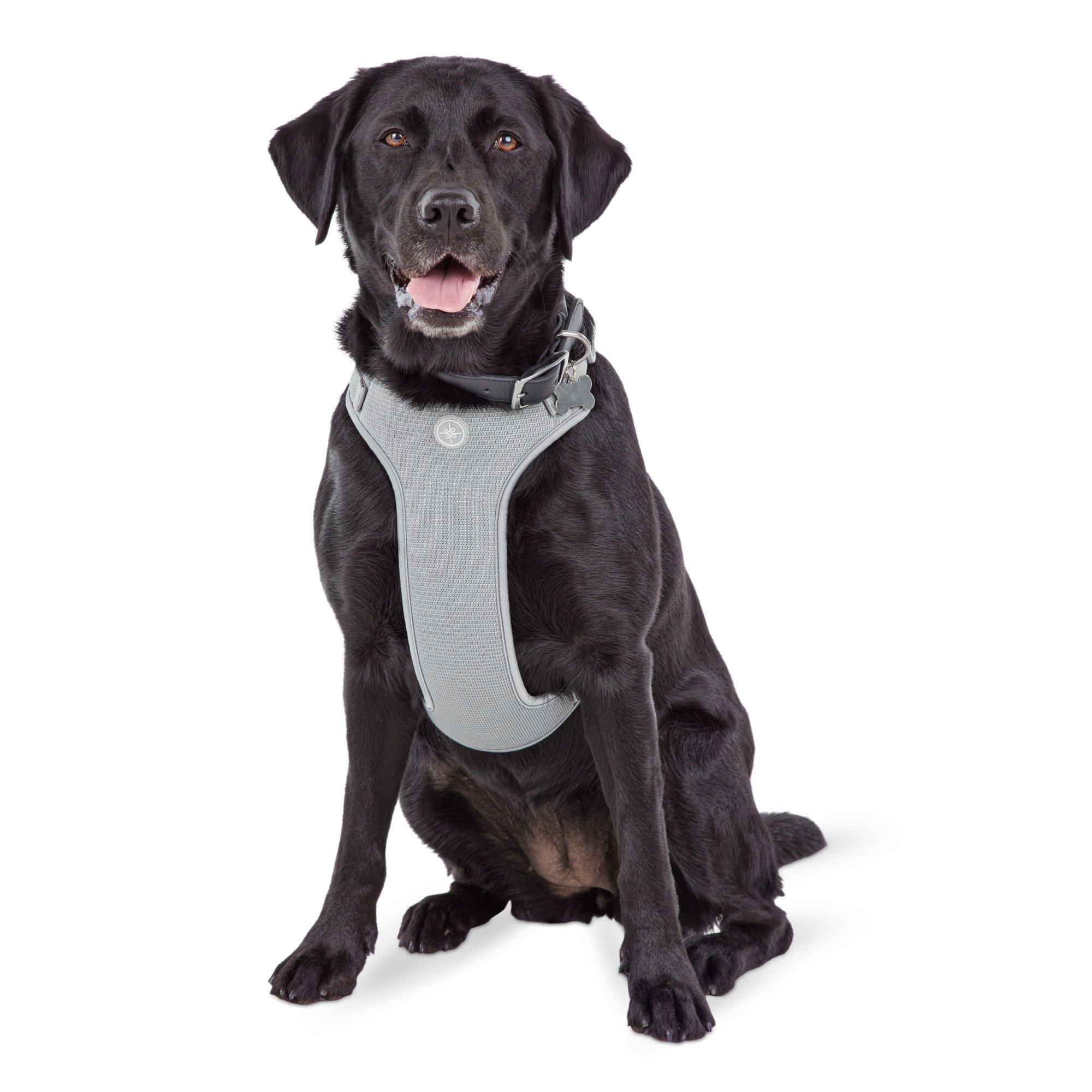 Jubilee Gray Large Dog Harness | Petco