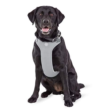Jubilee Gray Large Dog Harness | Petco