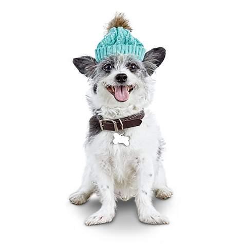 Bond Co Pom Pom Mint Green Dog Hat Petco