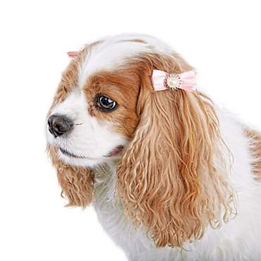 Bond & Co. Bejeweled Bow Hair Accessories for Dogs