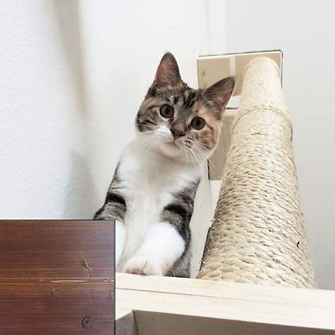 CatastrophiCreations Climbing Sisal Pole for Cats in English Chestnut