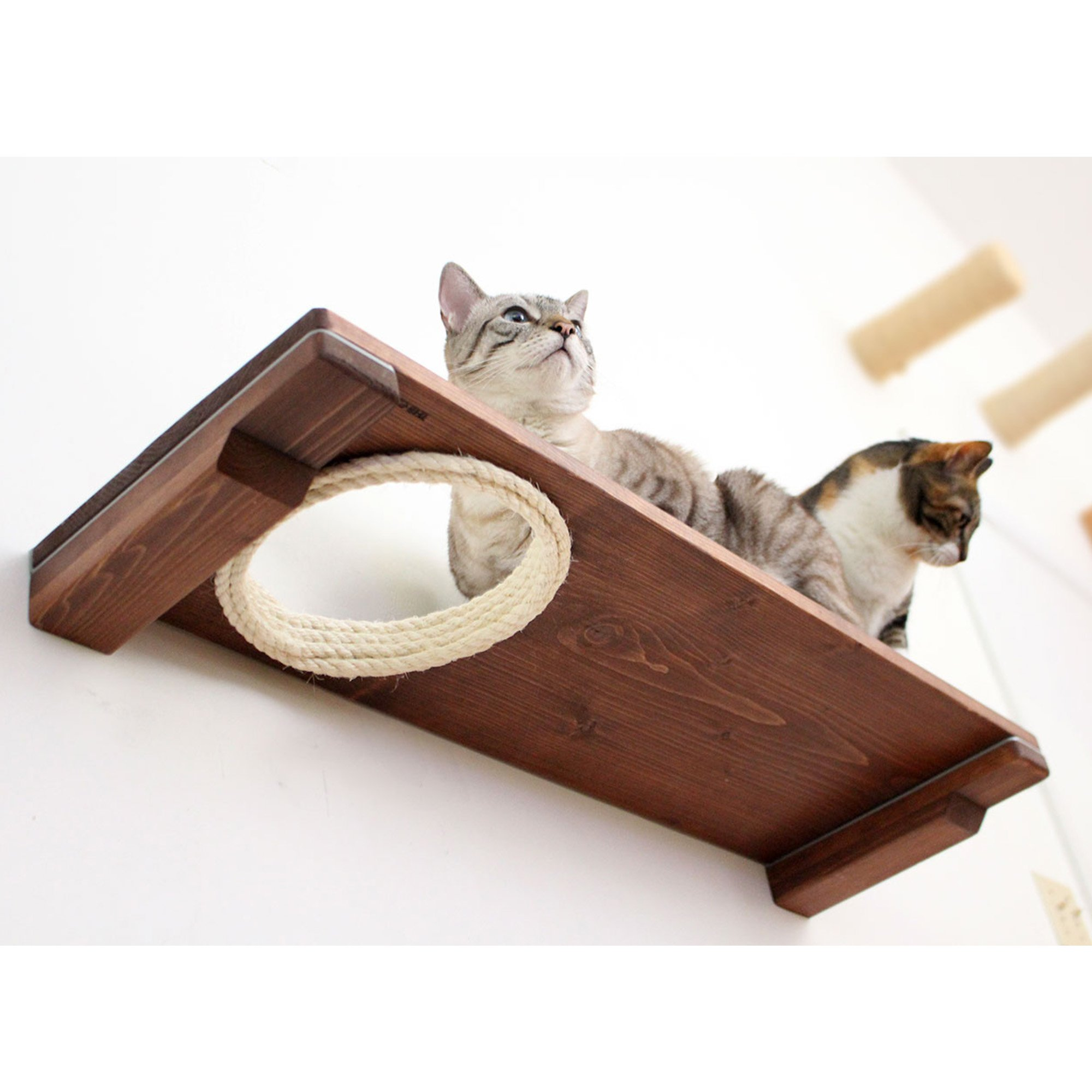 """Catastrophicreations The Cat Mod 34"""" Escape Hatch Shelf For Cats In English Chestnut, 34 In W X 3 In H, 8 Lb"""