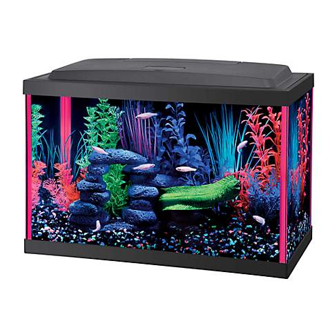 aqueon led 5.5 gallon pink aquarium kit   petco