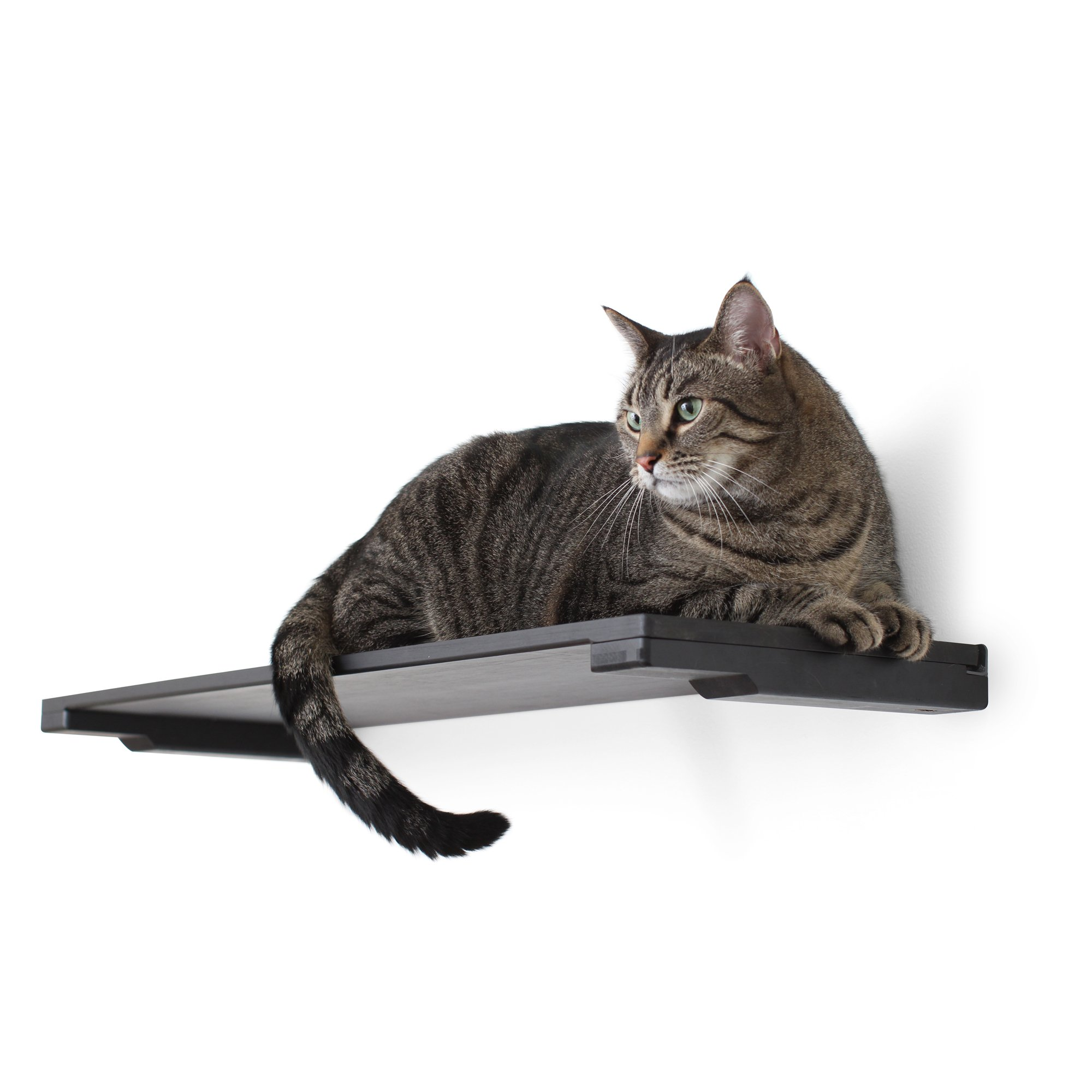 """Catastrophicreations The Cat Mod 18"""" Solid Wood Shelf For Cats In Onyx, 18.5 In W X 3 In H, 7 Lb"""