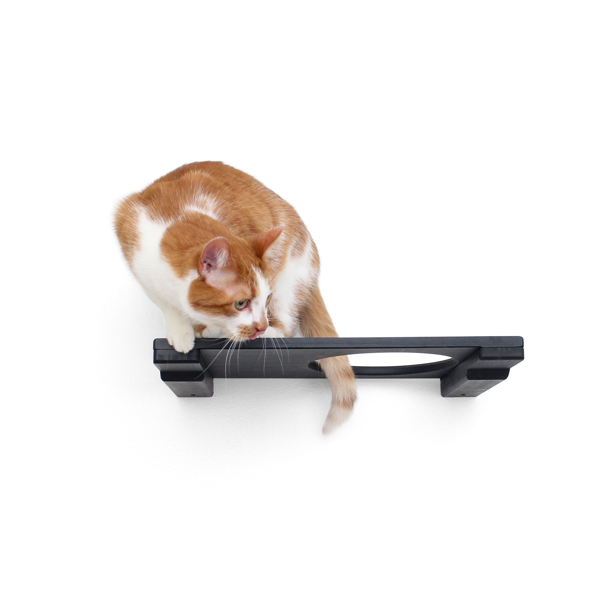 """Catastrophicreations The Cat Mod 18"""" Escape Hatch Shelf For Cats In Onyx, 18 In W X 3 In H, 7 Lb"""