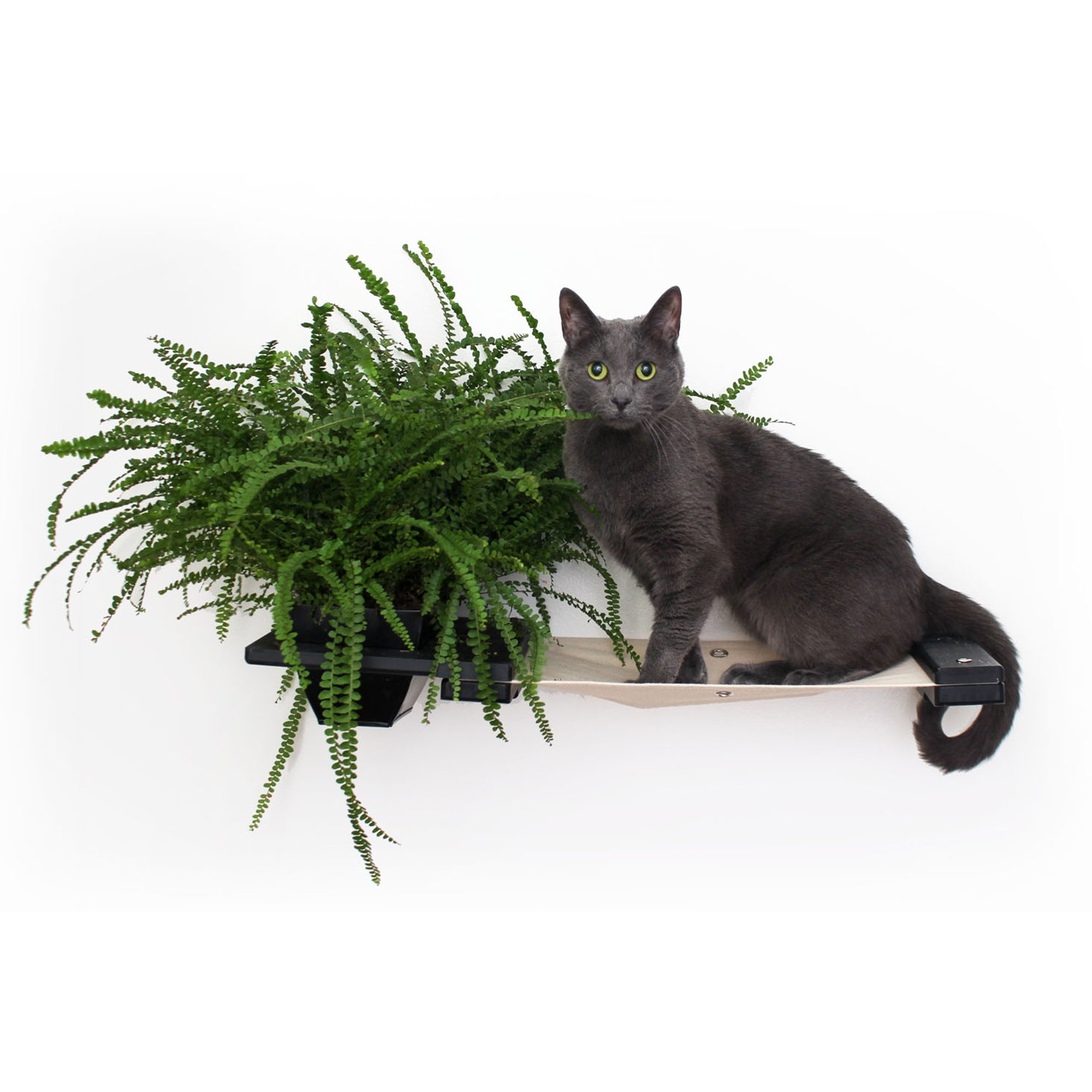 Catastrophicreations The Cat Mod Planter Shelf For Cats In Onyx, 10 In W X 3 In H, 4 Lb