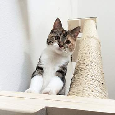CatastrophiCreations Climbing Sisal Pole for Cats in Natural