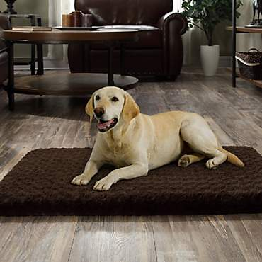 Beatrice Home & Pet Tobey Orthopedic Foam Chocolate Dog Beds