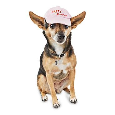 Bond & Co. Happy Camper Dog Hat