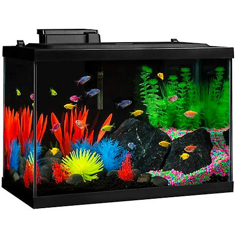 Glofish Aquarium Glass Kit With Blue Led Petco