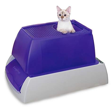 PetSafe ScoopFree Top-Entry Ultra Self-Cleaning Cat Litter Box with  Automatic Disposable Tray, Large