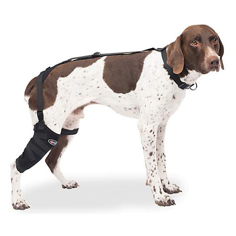 Caldera Hot & Cold Therapy Wrap with Gel for Dog Tall Stifles