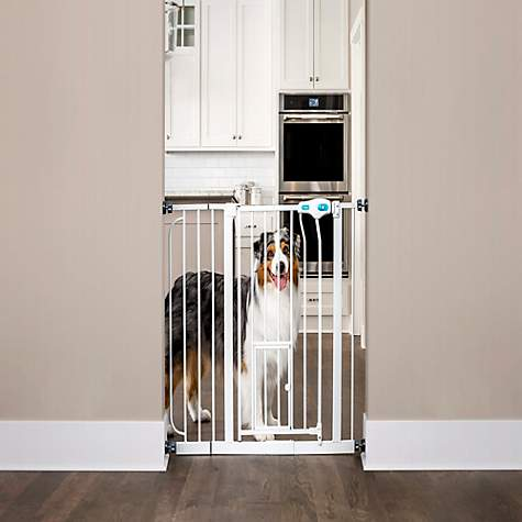 Incroyable Carlson Pet Products Extra Wide Walk Thru Pet Gate With Door | Petco