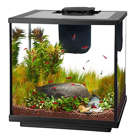Aqueon Led 7 5 Gallon Shrimp Aquarium Kit Petco