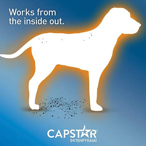 Capstar Flea Tablets For Dogs And Cats 2 25lbs Petco
