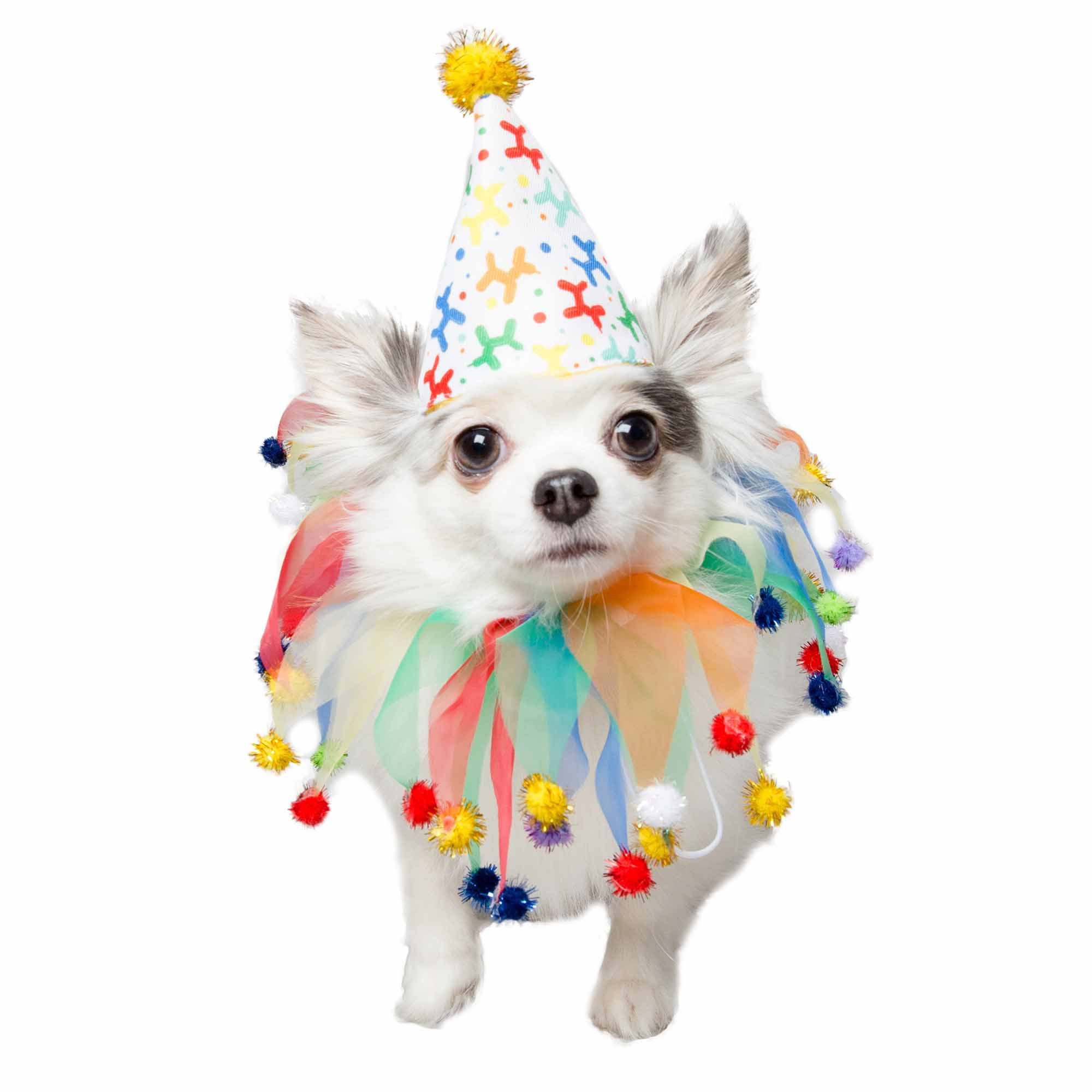 Pet Krewe Birthday Hat And Celebration Collar For Dogs