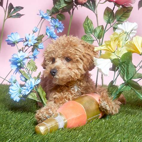 Bark All Day Rose Dog Toy Large