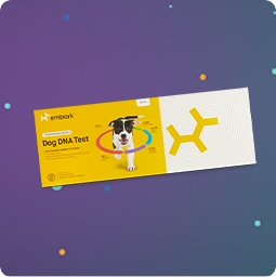 Dog Breed DNA I.D. Kits - Shop Now